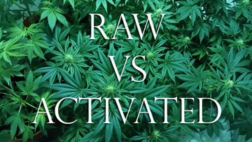 Raw CBD vs Activated CBD – Which is Best For You?