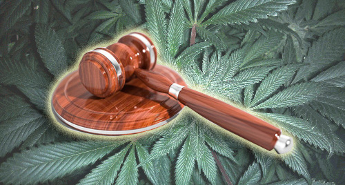 Hemp-Derived CBD vs the DEA