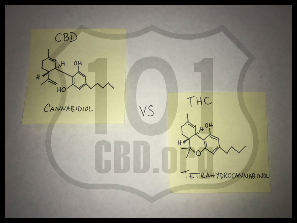 CBD vs THC – What's the Difference?